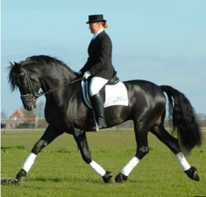 Gaits In Horses And Humans Understanding The Horse