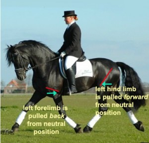 position english riding